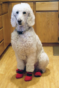 Keep Fluffy from scratching the floor in some sweet booties.